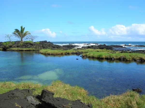 hawaii pond
