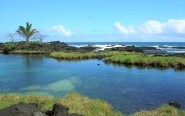 hawaii pond